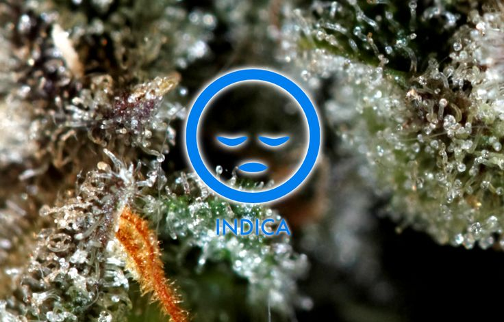 Petrolia Headstash Strain Review  This highly coveted indica strain was originally cultivated by Reeferman Seeds and soon after her inception she began to gain wide-scale appreciation for her deeply pungent, chemical taste and her heavy hitting high. Due to the high levels of resin she produces, Petrolia Headstash is an ideal strain for use in the creation of dabs,...  #cannabis #StrainGrade #marijuana #pot #weed #strains …
