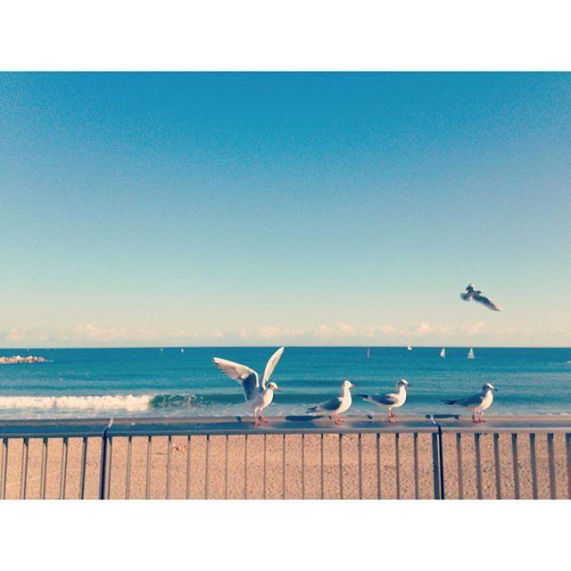 #barcelona #four #five #birds #beach #sand #lucky #photograpy