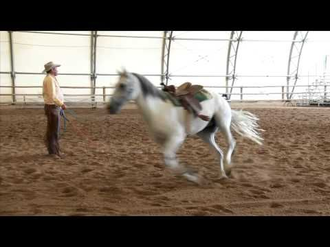 Train Your Horse to Circle with Pat Parelli ---Have you ever asked your horse to go out on a circle and he tries to turn to face you, or won't keep going? Natural horsemanship expert Pat Parelli demonstrates how to fix this common horse training problem.