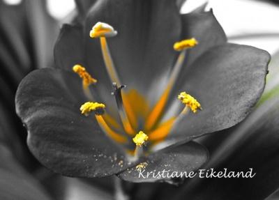 Svart blomst