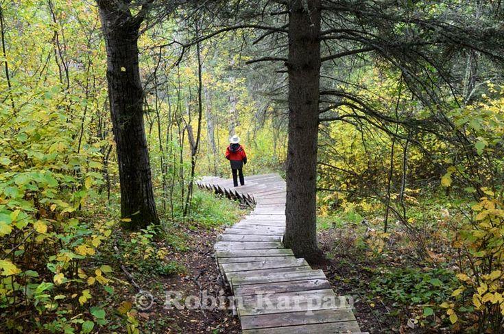Narrows Peninsula Hiking Trail, Prince Albert National Park - #Saskatchewan, Canada