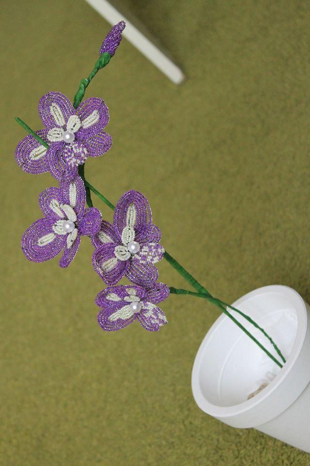 Orchidea :)