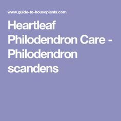 Heartleaf Philodendron Care - Philodendron scandens