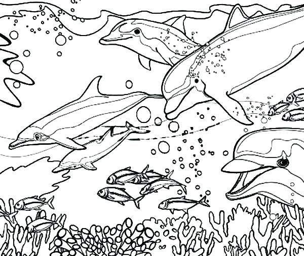 Http Dawgdom Com Dolphin Coloring Pages Free Dolphin Coloring Pages Free Dolphin Coloring Pages Cora Dolphin Coloring Pages Coloring Pages Fish Coloring Page