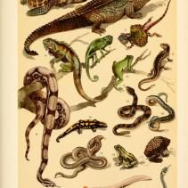 Free Vintage Illustrations of Snakes and Reptiles