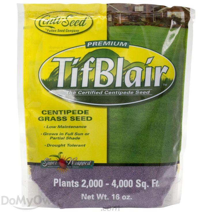 TifBlair Centipede Grass Seed