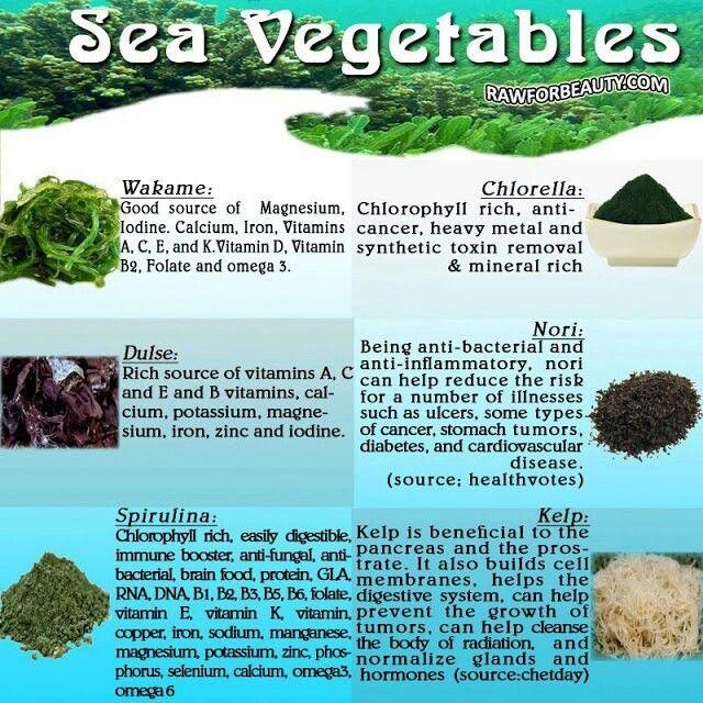 Why Seaweed - Seaweed & Co | Seaweed & Co