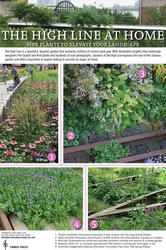 Five Plants From New York S High Line To Elevate Your Home Garden