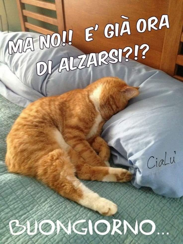 Buongiorno vignette varie pinterest cats kittens e for Buongiorno assonnato