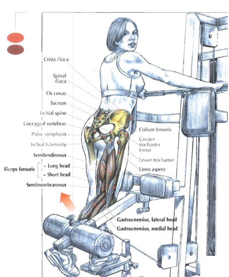 My Best Secrets to Train the Hamstrings Muscles – Part 2  Read more: http://www.strengthsensei.com/my-best-secrets-to-train-the-hamstring-muscles-part-2/#ixzz3O8uaKmoT