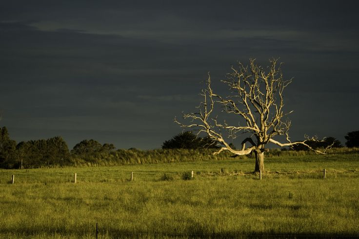 'Stormy Skies' Deloraine, Tasmania EVM Pet and Nature Photography Available to purchase from www.evmphotography.com