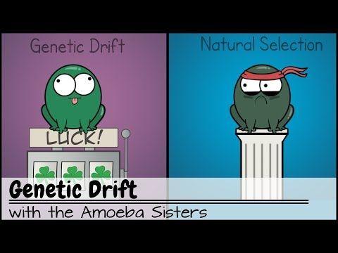 (172) Genetic Drift - YouTube