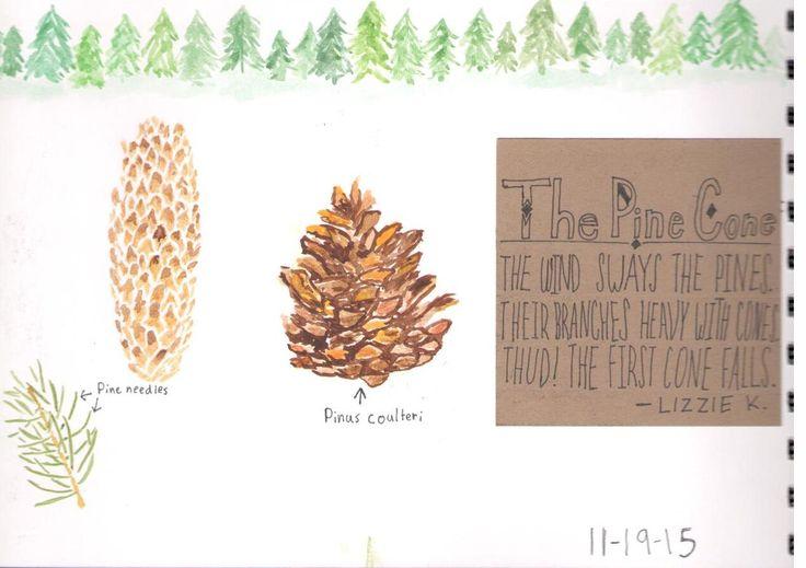 Sage Parnassus: Nature Notebook 10-Year Retrospective