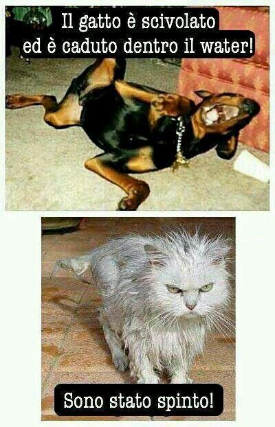 Ben noto Oltre 25 fantastiche idee su Foto divertenti di gatti su Pinterest  DU74