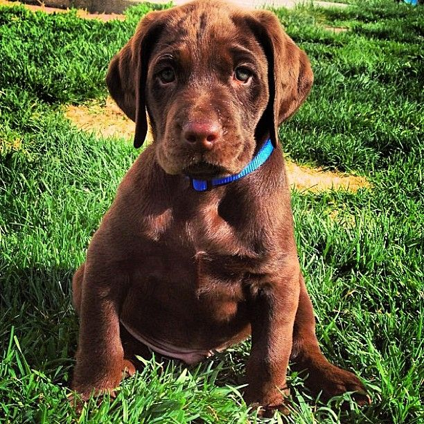 10 Facts about #puppies