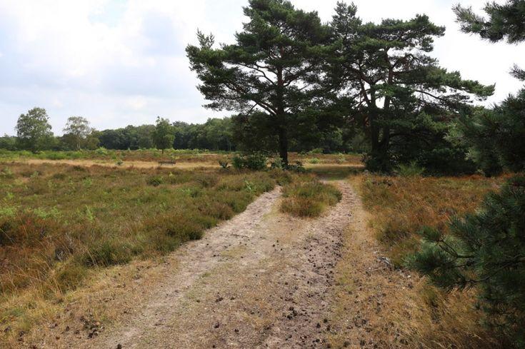 Losloopgebied Nieuw Bussummerheide vanaf Langerhuizenweg, ga heerlijk wandelen in losloopgebieden met uw hond!