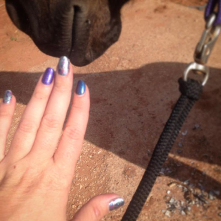 Admiring my nails while EQue gets his monthly pedicure!!! Hehehe #horses #farrier #nails #maybeweshouldgetmatchingnails #hoofies #jamberry #canhaveprettynailsandhorses #dirtyhandsprettynails #shockwavejn #sapphirejn #stargazingjn #trushinejn