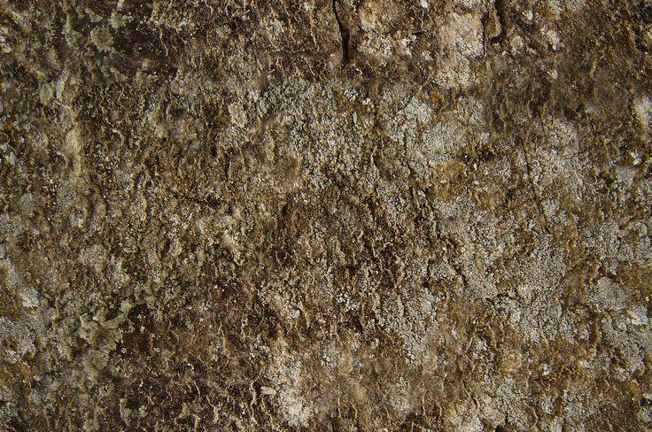 Moss Rock Texture Seamless Underwater Pinterest D