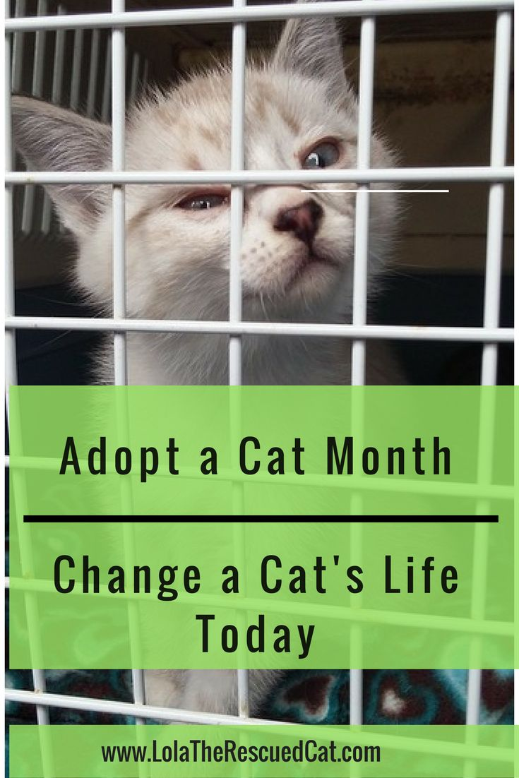 It's Adopt A Cat Month! Lola has tips on how to get involved!