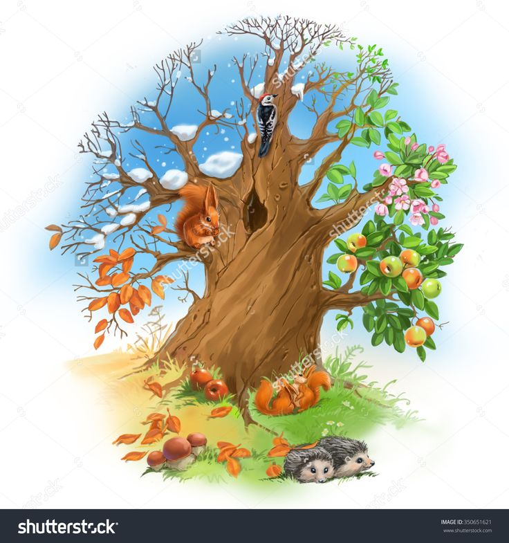 stock-photo-tree-seasons-summer-winter-spring-autumn-with-squirrel-hedgehogs-and-woodpecker-350651621.jpg (1500×1600)