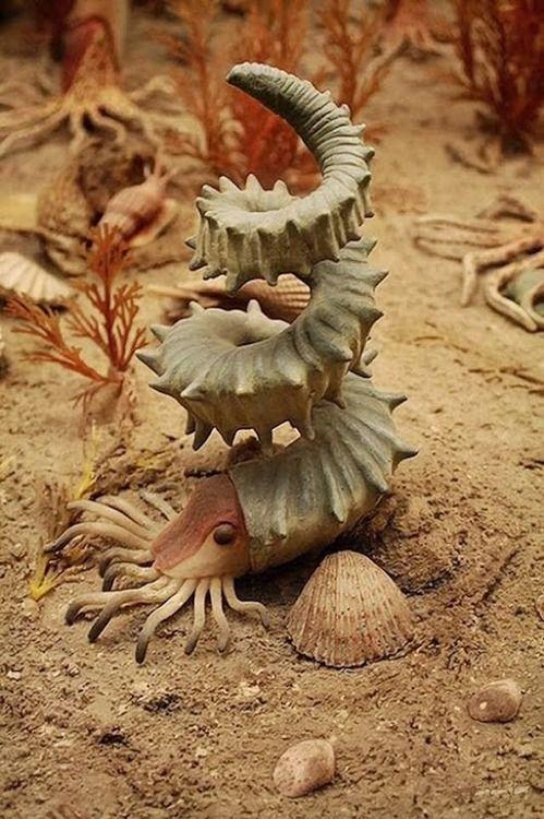 the-power-is-yours:  Helioceras heteromorph ammonite: The...