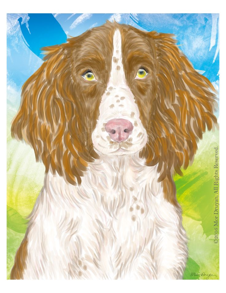 Happy to share one of my favorite original naive painting of a gorgeous #SpringerSpaniel available on my #etsy store: Art Print Of Original Painting-8x10-Springer Spaniel art-Spaniel Print #NurseryDecor #DogGifts #WallDecor #artprint #giclee #colorful #dogdrawing #petportrait #walldecor #artprint #art #print http://etsy.me/2oMWbkV