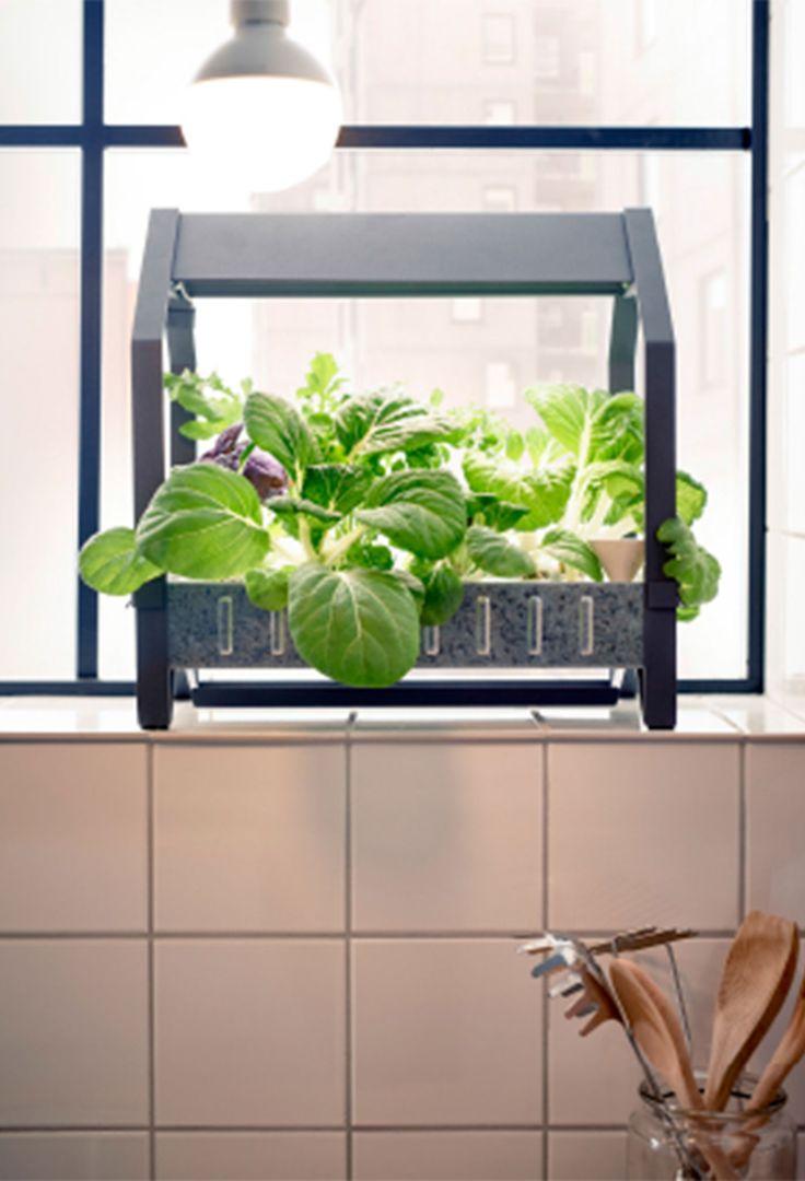 Hydroponics Herb Garden Kitchen 17 Best Ideas About Hydroponics Kits On Pinterest Water