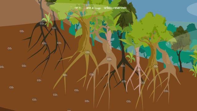 El programa Bosques Andinos es una iniciativa regional de la Cooperación Suiza que servirá como generador y difusor de información mediante la investigación aplicada en los bosques andinos, para detectar, validar y compartir las buenas prácticas encontradas, que finalmente, serán elevadas a un ámbito político. Con el Programa Bosques Andinos se busca incentivar el interés regional hacia la conservación de los bosques andinos y promueve sinergias en estrategias de adaptación y mitigación;