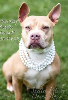 ●7•17•17 SL● I'M MISS KITTY! Dogs for adoption,euthanization,rescue,sponsor