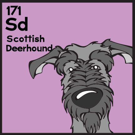 The 171st Elemutt of The Dog Table is the Scottish Deerhound.  The Dog Table Poster features illustrations of 186 dog breeds. Dogs are organized in a similar layout and structure to the Periodic Table.  #dogsofpinterest #ScottishDeerhound BUY THE DOG TABLE POSTER  http://thedogtable.com