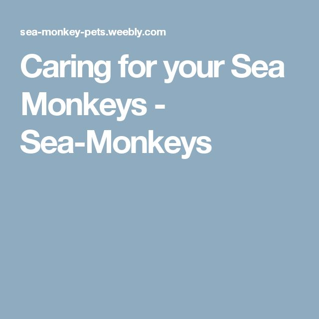 Caring for your Sea Monkeys - Sea-Monkeys
