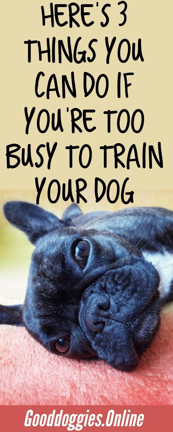 3 Best Dog Training Solutions For Busy Pet Parents Dog Training Best Dog Training Training Your Dog