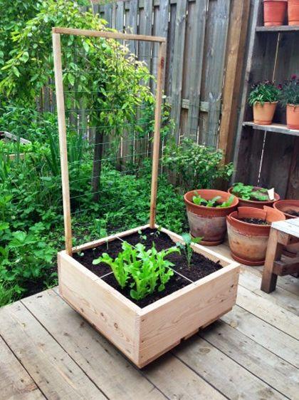 Moestuinieren met nederhout moestuinieren vegetable for Vegetable garden tools