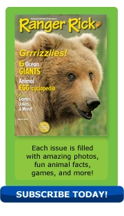 March 2013 issue of Ranger Rick magazine featuring an article about grizzly bears.  www.nwf.org/rangerrick