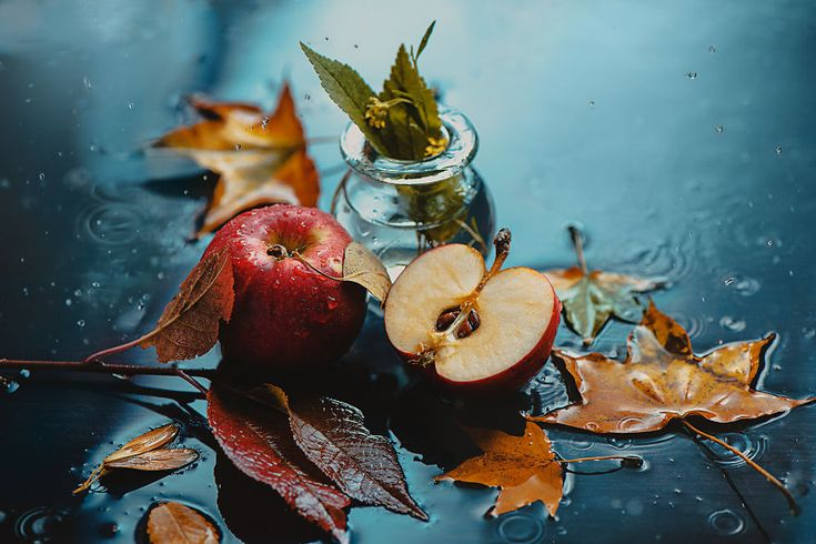 I Illustrate Moments Of Autumn And Rain With Still-Life Photography | Bored Panda