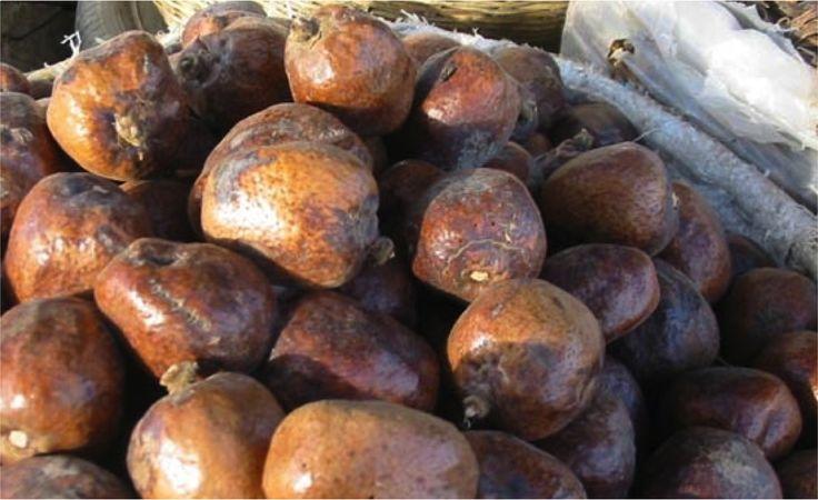 """Konkorong ou noix de doum ou Hyphaene thebaica. a macération d'écorce de racine se prend pour traiter les coliques intestinales et la hernie inguinale. Les fruits ont un endocarpe dur et les """"noix"""" sont transformées en balles, en jouets et en armes."""