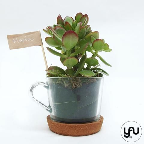 MARTURII plante suculente in cana ceai - M11 - https://www.yau.ro/collections/marturii-nunta-si-botez?page=1 - yauconcept - elenatoader