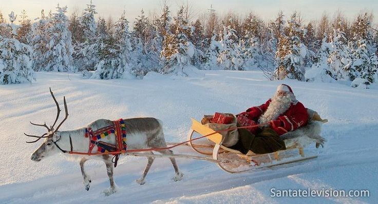 Reindeer ride of Santa Claus in a forest in Lapland