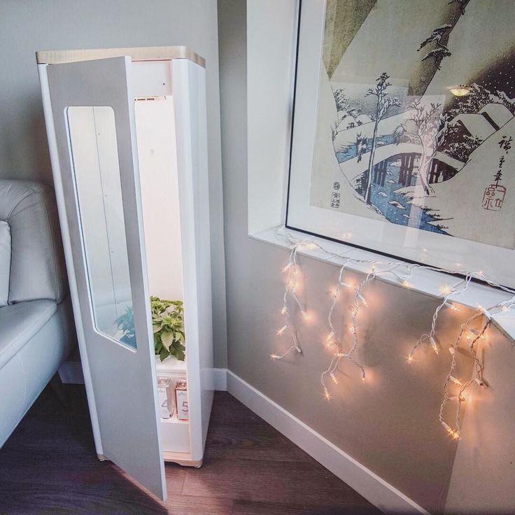 Some nice Christmas lights and artwork accompanying this wild Grobo.