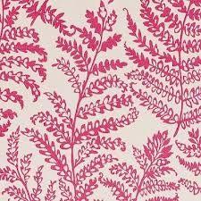 cushion fern - Google Search