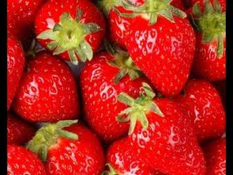 How to grow delicious hydroponic Strawberries step by step DIY tutorial instructions