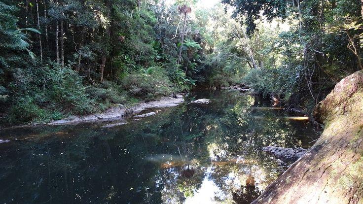 Broken River- Image taken near fern flats campground.#Brokenriver #Eungella #Australia
