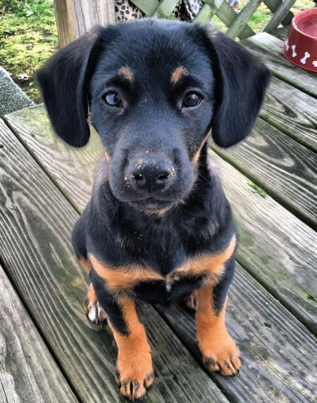 Mutts are my kryptonite.  Rottie/Shepherd mix.