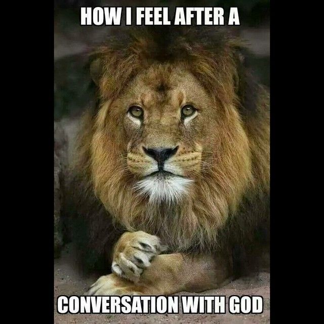85 best images about lion memes on pinterest lion king