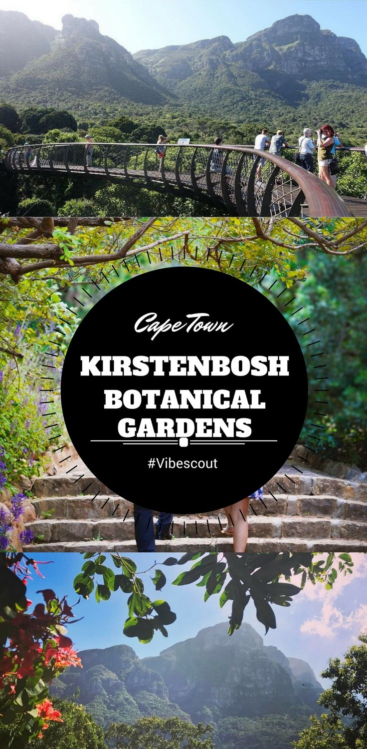 Rated as Africa's most beautiful garden, Kirstenbosh is a breathtaking place located at the eastern foot of Table Mountain.  #Kirstenbosh#botanicgarden