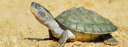 Watch turtles hatch and go to the sea