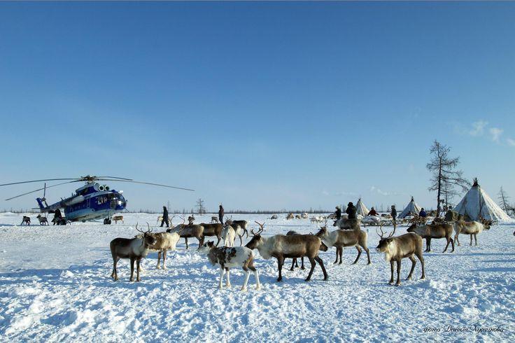 Yamal tundra. The indigenous people - Nenets. Photo: Danil Khusainov #Arctic #ArcticArt #indigenous_people #Yamal #Russia #ArcticInfo #tundra