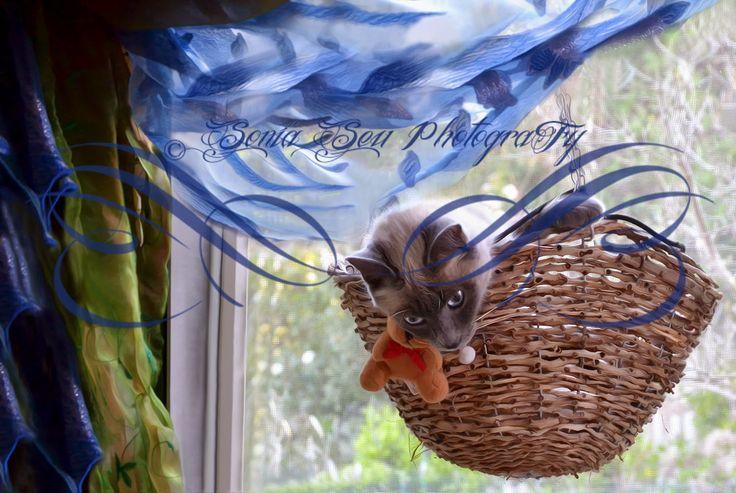 Lapislazzuli Blu: ♪ ♫ ♩ ♬ #Mi #voglio #cullare, cullare ♪ ♫ ♩ ♬