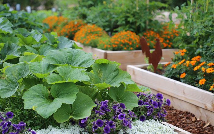 Potager garden: combine vegetables and flowers to create  pretty and edible garden