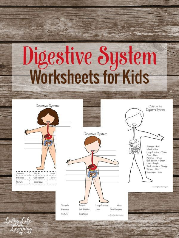Digestive System Worksheets for Kids